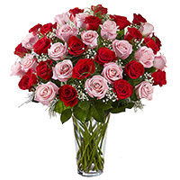 Diwali Flowers to Hyderabad. Red Pink Roses in Vase 50 Flowers to Hyderabad Online