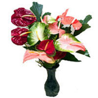 Best Flower Delivery Hyderabad
