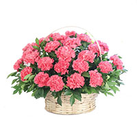 Pink Carnation Basket of 24 Flowers to Hyderabad. Same Day New Year Flowers to Secunderabad