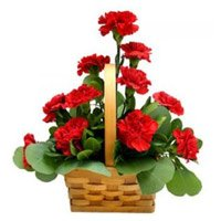 Red Carnation Basket 12 Flowers. New Year Flowers Delivery in Secunderabad