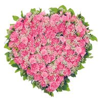 Order Diwali Flowers to Hyderabad consisting Pink Carnation Heart 50 Best Flowers in Hyderabad