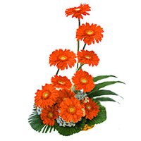 Orange Gerbera Basket 12 of Flowers. Deliver New Year Flowers in Secunderabad