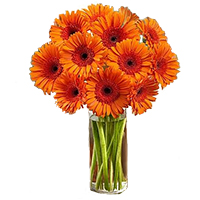 Deliver Online of Orange Gerbera in Vase with 24 Rakhi Flowers in Hyderabad