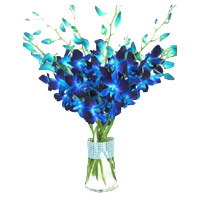Send New Year Flowers to Secunderabad including Blue Orchid Vase with 12 Stem Flowers