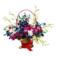 Mixed Orchid Basket with 9 Stem. Send New Year Flowers to Secunderabad